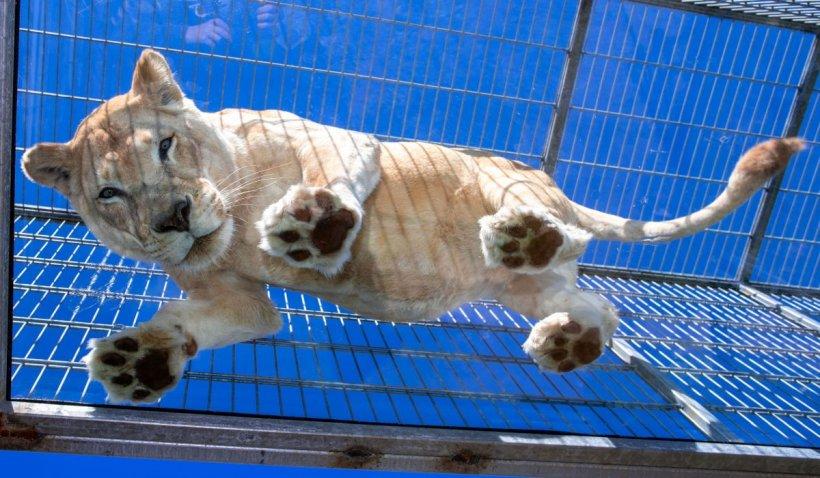 Grădina Zoologică din Piatra Neamţ se închide. Cum au reuşit localnicii această premieră