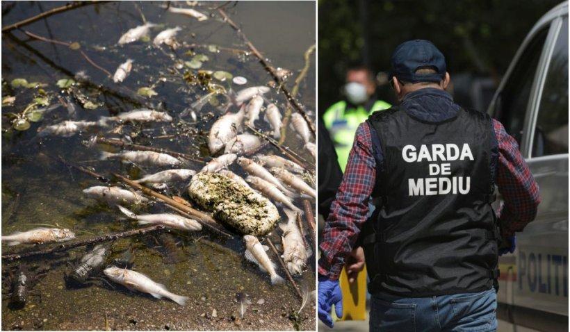 O poluare masivă cu amoniac pe Bicaz a ucis peștii din două păstrăvării. Populaţia, avertizată să nu consume apa din râu