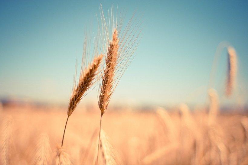 """Strategia """"Farm to Fork"""", componentă esenţială a Planului Verde European"""