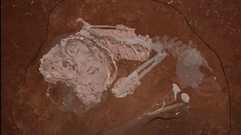 Cel mai vechi schelet uman, de 78.300 de ani, descoperit într-o peşteră din Africa