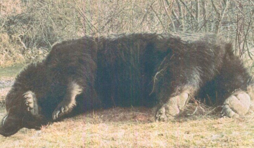 Asociația care a organizat vânarea ursului Arthur cere la CNA sancțiuni pentru toată presa