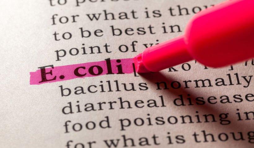 Infecția urinară cu E.coli - cum poate fi prevenită ușor