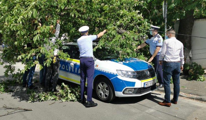 Maşină de Poliţie strivită de un copac smuls de vânt, în Bucureşti
