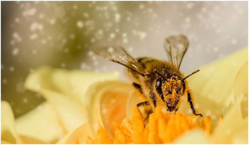 20 mai, Ziua Mondială a albinelor