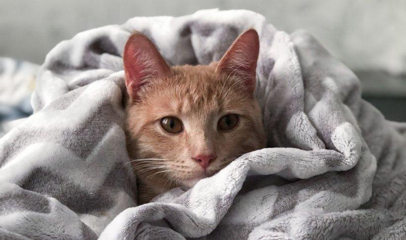 Un bărbat și-a vândut mașina pe care o avea de 28 de ani, pentru a-și salva pisica grav bolnavă