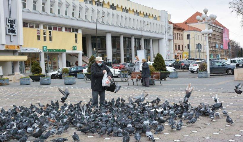 """Hrănirea porumbeilor pe stradă este amendată în Timișoara. """"Riscăm să devină violenți"""""""