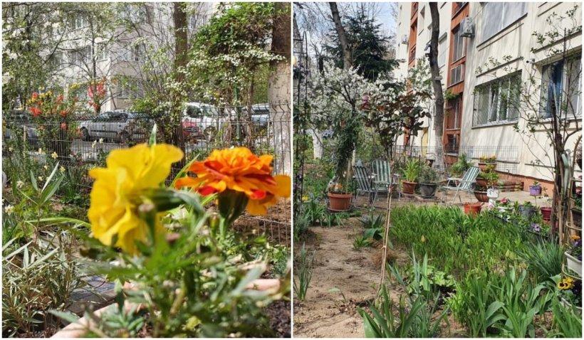 Un bucureștean a fost reclamat de zece ori de o vecină, revoltată pentru că el îngrijește grădina blocului