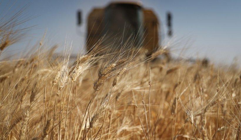 """România exporta """"pe nimic"""" grâu și primește pâine congelată de 13 ori mai scumpă, spune secretarul de stat în Ministerul Agriculturii"""