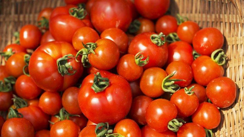 Programul Tomata a fost doar o promisiune. Ţăranii nu au primit nimic