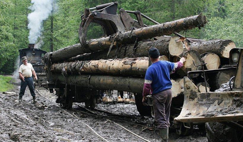 Se scumpește lemnul de foc: Preţul lemnului de lucru s-a dublat într-o singură lună