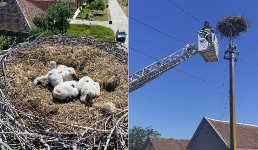 """Trei pui de barză căzuţi din cuib au fost salvaţi de pompieri, în Chereluş: """"O misiune altfel, pentru că fiecare viață contează!"""""""