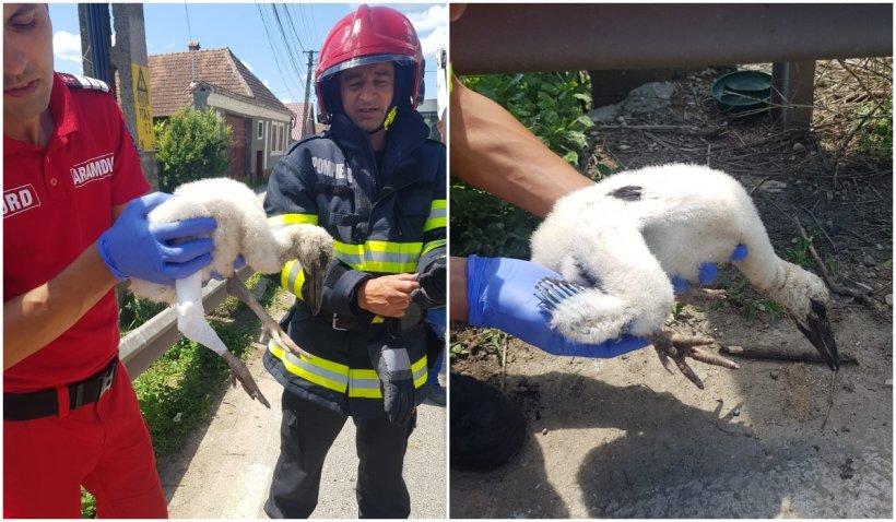 Un pui de barză a fost salvat de pompierii brașoveni după ce a căzut din cuib