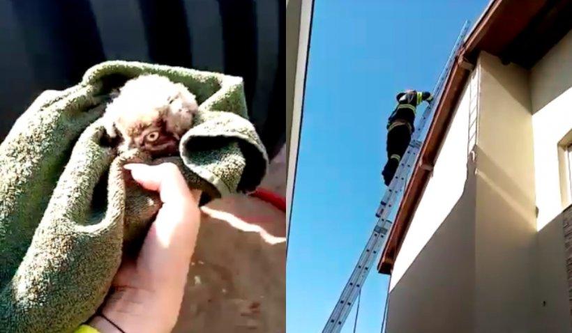 Imagini inedite cu un pui de bufniță, salvat de pompierii din Timiș