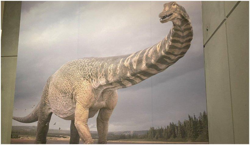 Titanul sudic, cel mai mare dinozaur descoperit vreodată în Australia