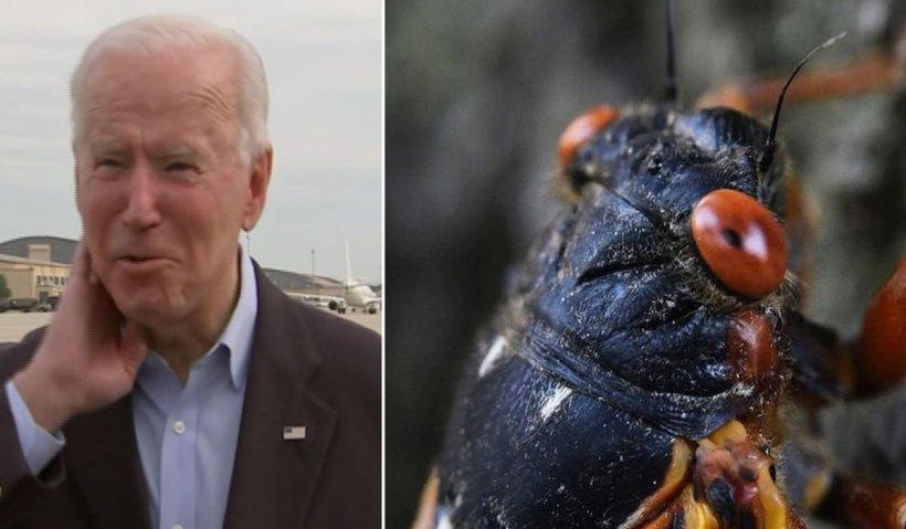Președinte SUA, Joe Biden, asaltat de o cicadă. Insectele au provocat întârzierea avionului cu ziariști