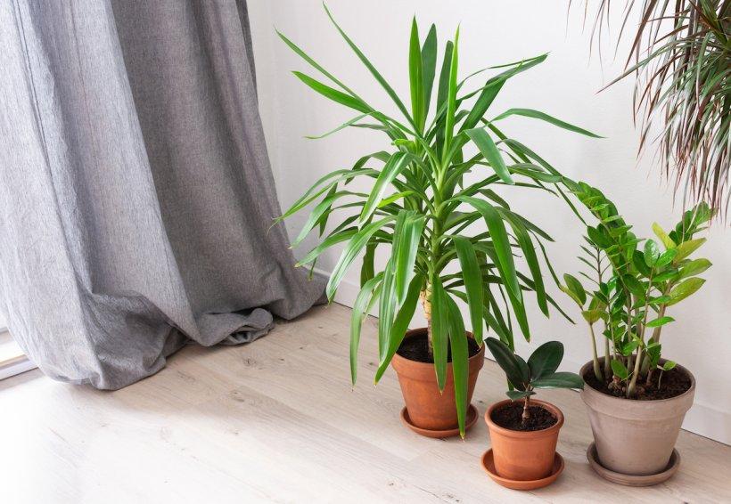 Plantele pe care nu trebuie să le ții în casă pentru că aduc ghinion