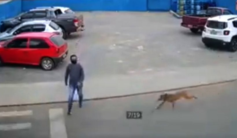 Tânăr lovit pe trecerea de pietoni de un câine care alerga după o maşină pe stradă