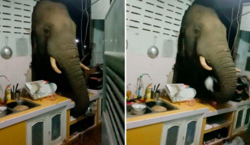 Elefant, suprins când sparge peretele unei case din Thailanda și scotocește cu trompa prin sertare, după mâncare