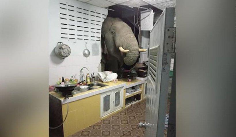 """Un elefant a distrus casa unei femei, pentru a-și băga trompa în frigider. """"Dormeam și ne-a trezit un sunet din bucătărie"""""""