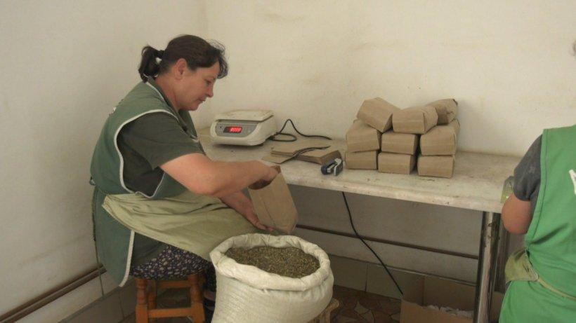 Terapeutul din Apuseni care prepara zilnic zeci de combinații de plante pentru a trata natural, fără efecte adverse, orice boală