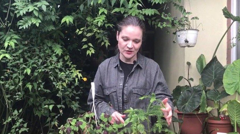 Plantele la ghiveci care aduc iubirea şi înţelegerea în casă