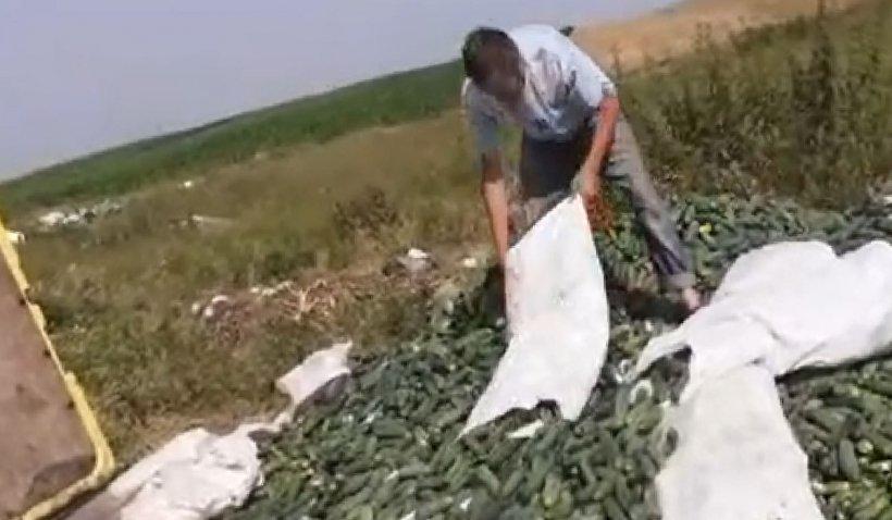 """Un agricultor din Mehedinţi aruncă tone de castraveţi pe câmp în semn de protest: """"Ia domnule Cîţu să îţi faci şampon să îţi crească mintea. Ne-aţi distrus"""""""