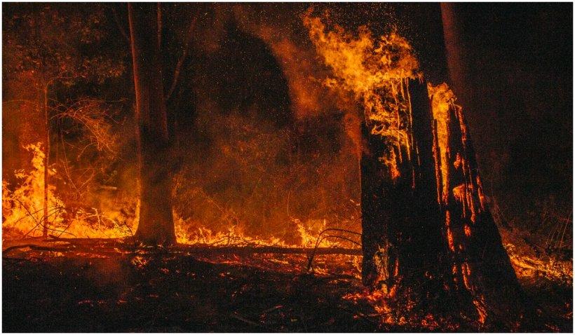 Incendii uriaşe de vegetaţie în Siberia, din cauza caniculei