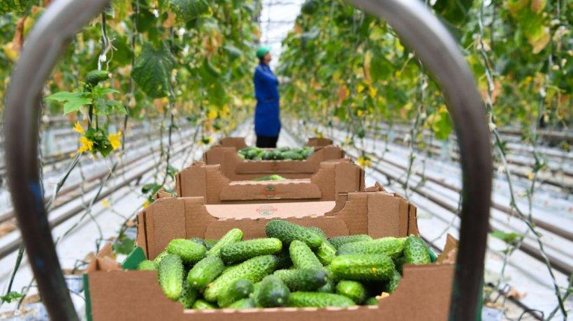 50.000 de euro pentru tinerii fermieri care revin din străinătate și dezvoltă o afacere în agricultură