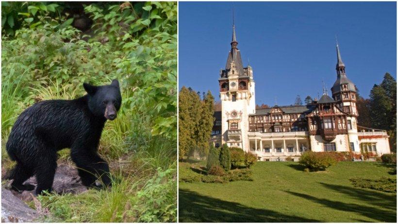 """Un urs a """"vizitat"""" zona Castelului Peleş din Sinaia. Turiştii, avertizaţi prin mesaj RO-Alert"""