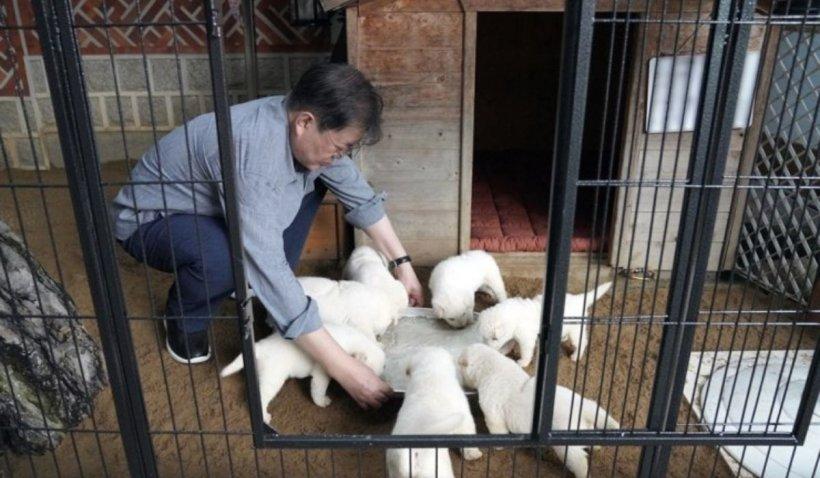 Cățelușa oferită de Kim Jong-un omologului său din Coreea de Sud a născut 7 pui