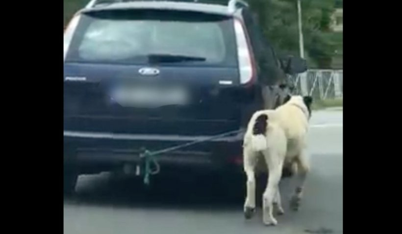 Un bărbat din județul Sibiu care și-a condus mașina cu un câine legat de cârlig, sancționat cu o amendă infimă