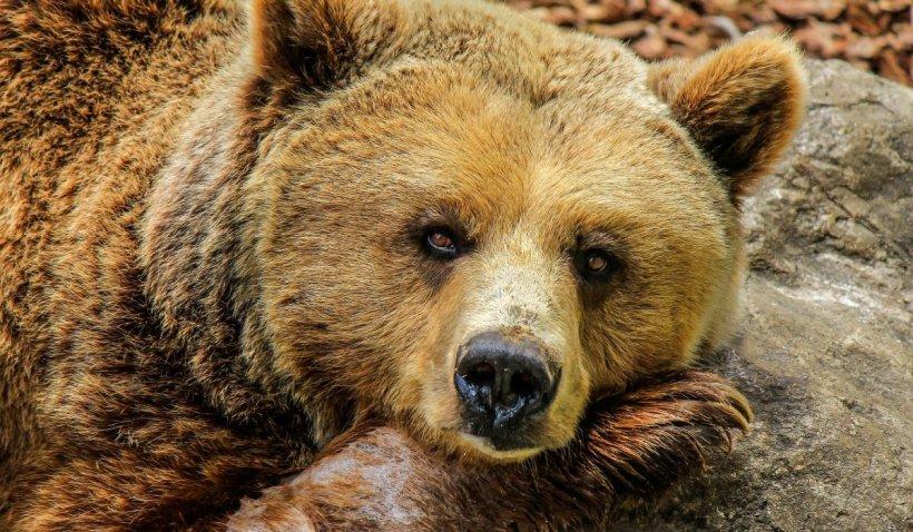 Costul salvării unui bărbat atacat grav de urs: Mii de euro pentru spitalizare, operații și medicamente