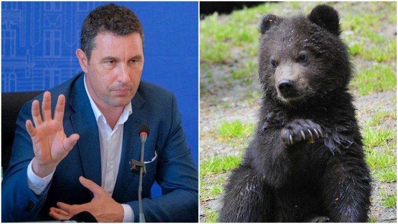 Urşii care atacă oameni, o problemă naţională care pare de nerezolvat. Soluţiile propuse de Tanczos Barna, ministrul Mediului