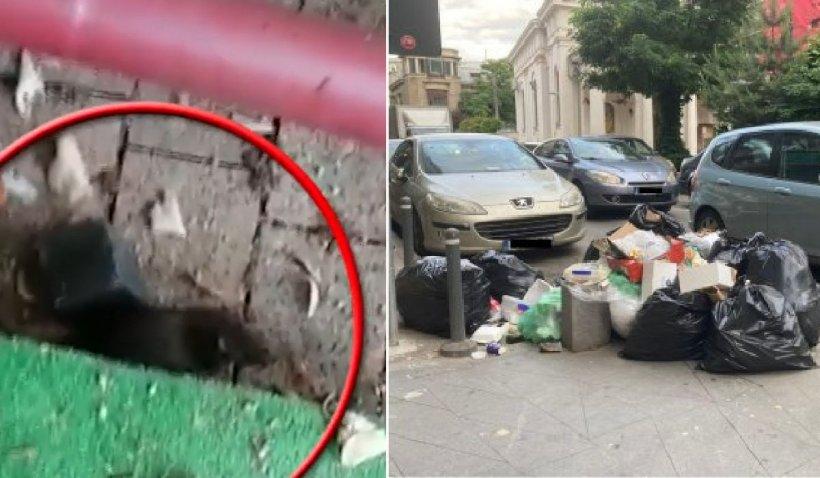 Bucureşti, micul Paris al marilor gunoaie, s-ar putea transforma în curând într-un focar de infecţie