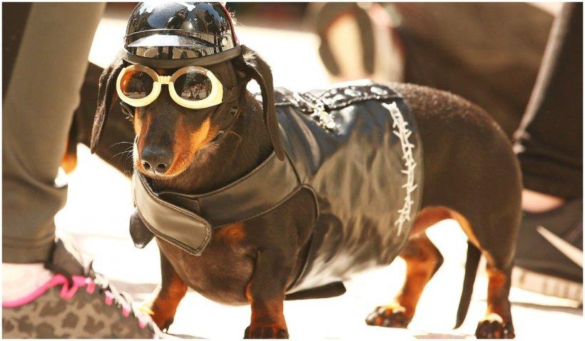 Cetățenii cu câini din Tel Aviv, obligați să ofere autorităților mostre din ADN-ul animalelor