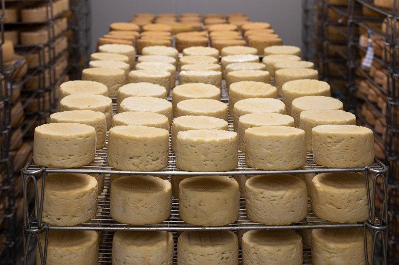 Cum arată brânza care nu a văzut vreodată laptele. Am testat mai multe sortimente de brânză din piețe și supermarketuri, iar rezultatele sunt îngrijorătoare