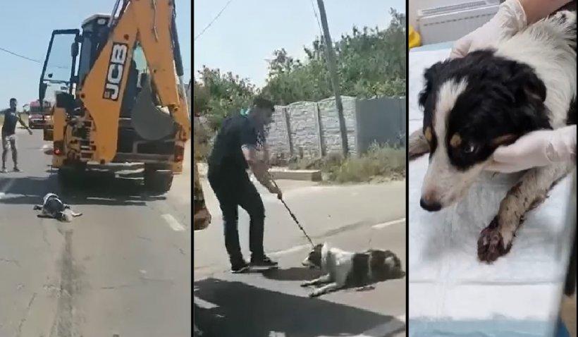 Câine târât zeci de kilometri cu excavatorul, salvat de şoferii care au blocat în trafic utilajul, în Teleorman
