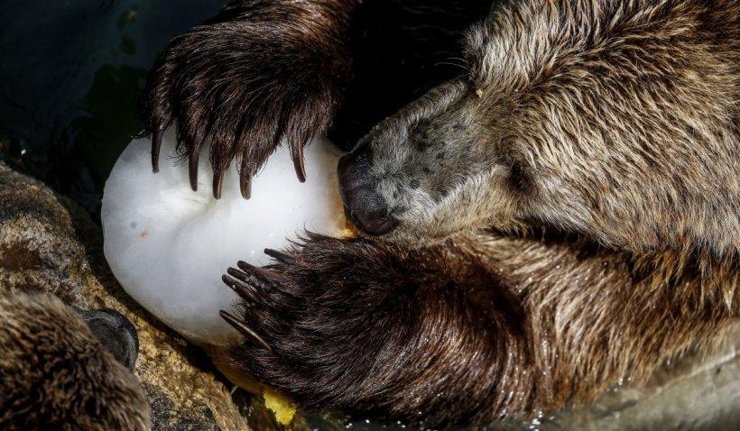 Ministerul Mediului a cerut să se tripleze amenzile pentru persoanele care hrănesc urșii