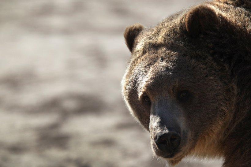 Un bărbat s-a luptat cu un urs grizzly într-o cabană izolată din Alaska timp de o săptămână până când a fost în sfârșit salvat