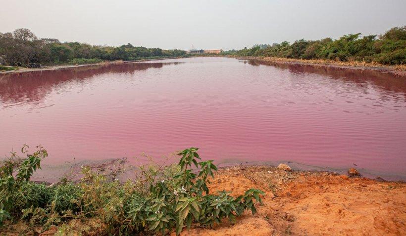 Laguna roz. Un lac argentinian a căpătat peste noapte o culoare tulburătoare