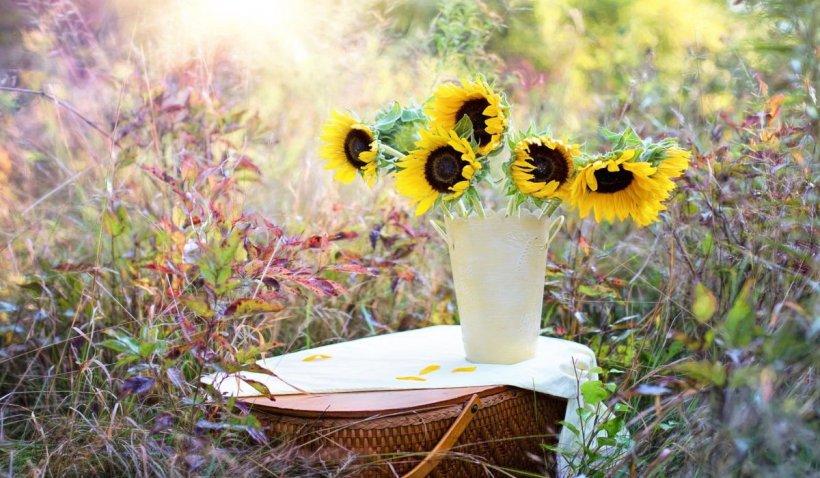 Top 5 buchete de flori pe care le poți dărui vara asta