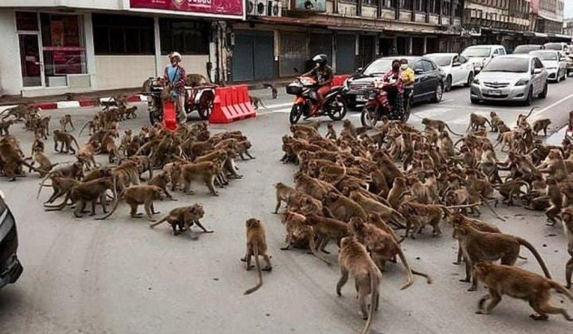 Imagini cu două bande rivale de maimuțe care s-au războit în plină stradă. Animalele s-au bătut pe mâncare în fața mai multor trecători