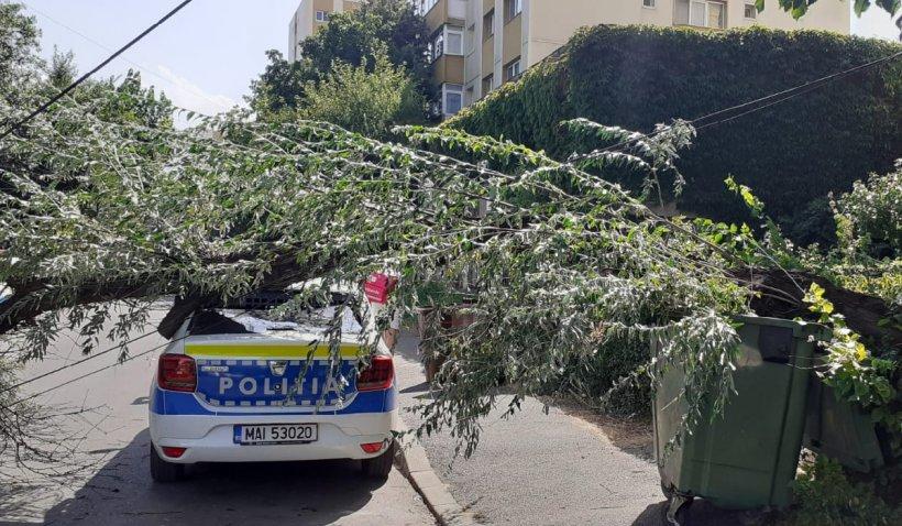 Maşină de poliţie strivită de un copac pe o stradă din Ploieşti