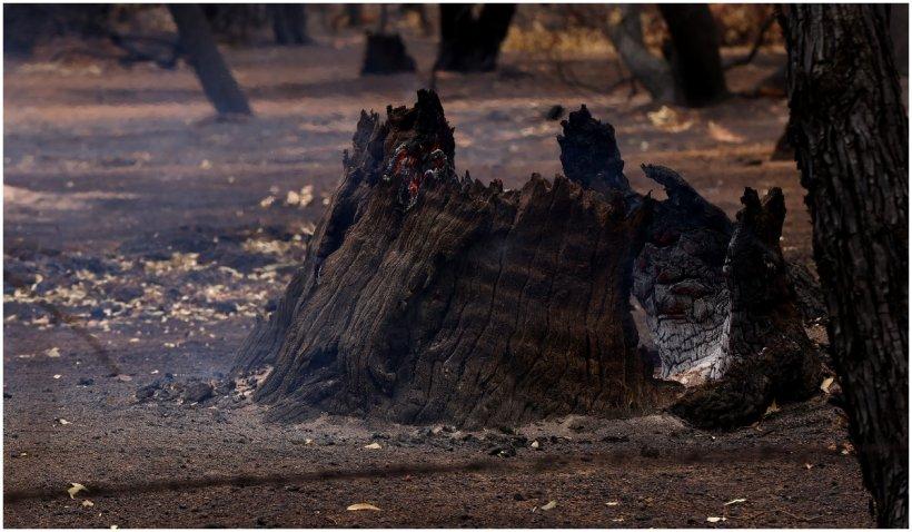 După Turcia şi Grecia, Bulgaria este în flăcări pe fondul valului de căldură