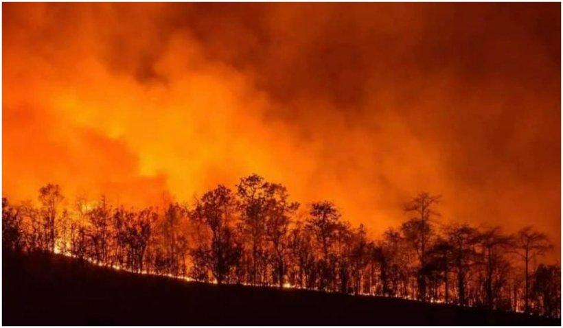 Incendiile din sudul Italiei fac victime printre turiști