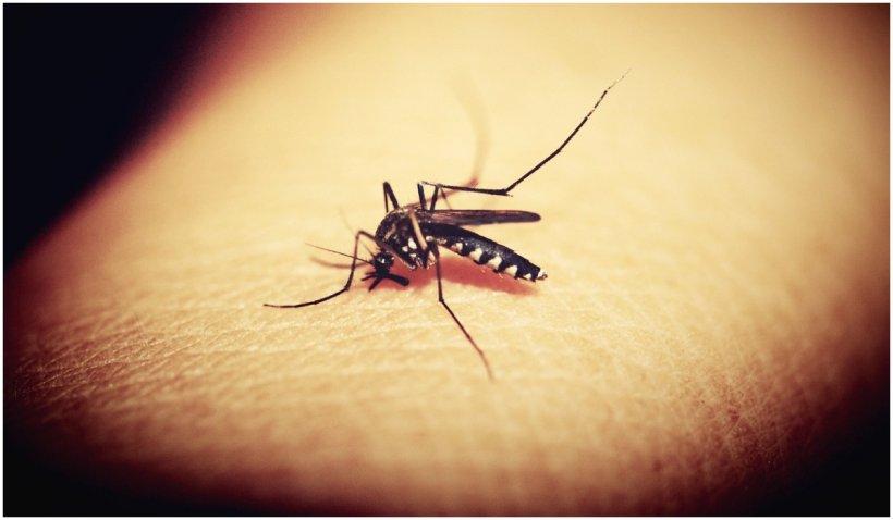 Soluție împotriva țânțarilor făcută în casă, din câteva ingrediente banale
