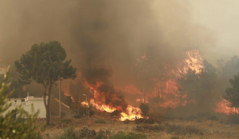 Sudul Italiei cere declararea stării de urgență, din cauza incendiilor care pârjolesc păduri, stațiuni şi zone rezidenţiale