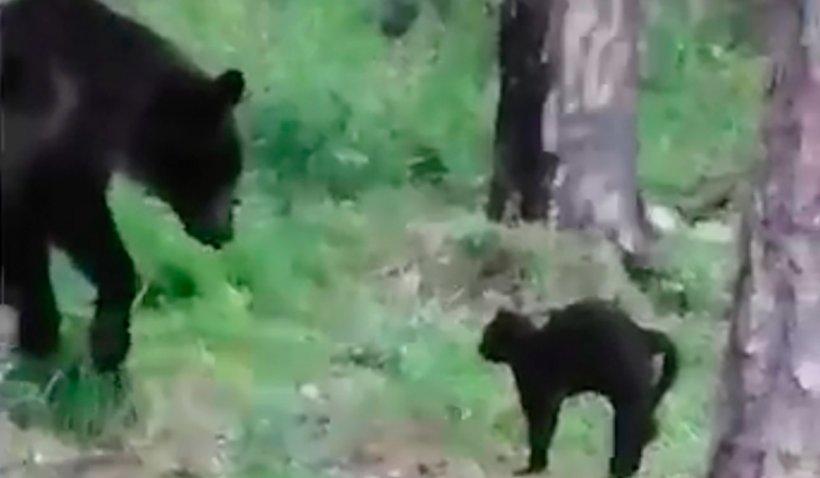 """Momentul în care motanul Vasya pune pe fugă un urs, ca să salveze un grup de pescari, într-o pădure din Rusia: """"Și îl cerți acasă pentru că rupe tapetul!"""""""