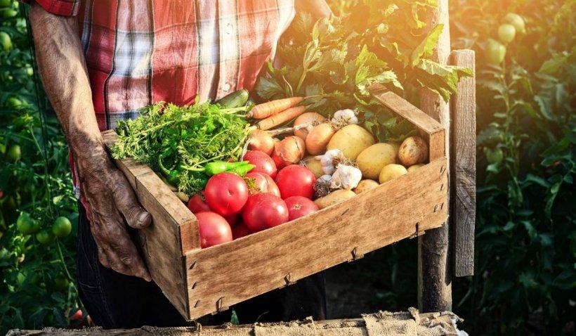 """România, ţara paradoxurilor. Preţurile cresc în magazine, în timp ce fermierii dau faliment: """"Ne ducem la pierzanie"""""""