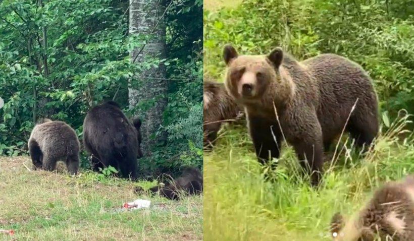"""Cântăreața Delia a surprins 13 urși, în 20 de minute, pe un traseu din zona barajului Vidraru: """"Erau la stradă"""""""